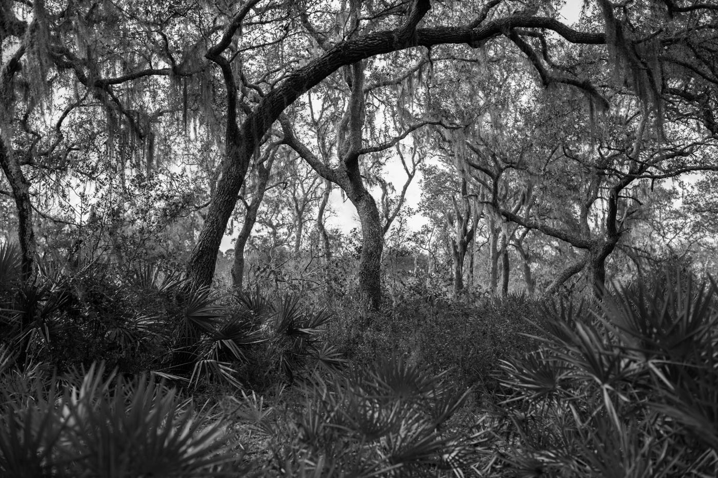 Forest-20.jpg