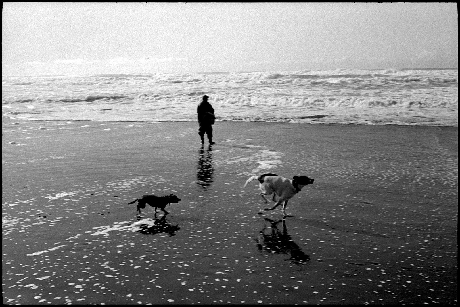 No. 0419_28A - Dogs, Ocean Beach. San Francisco, CA.