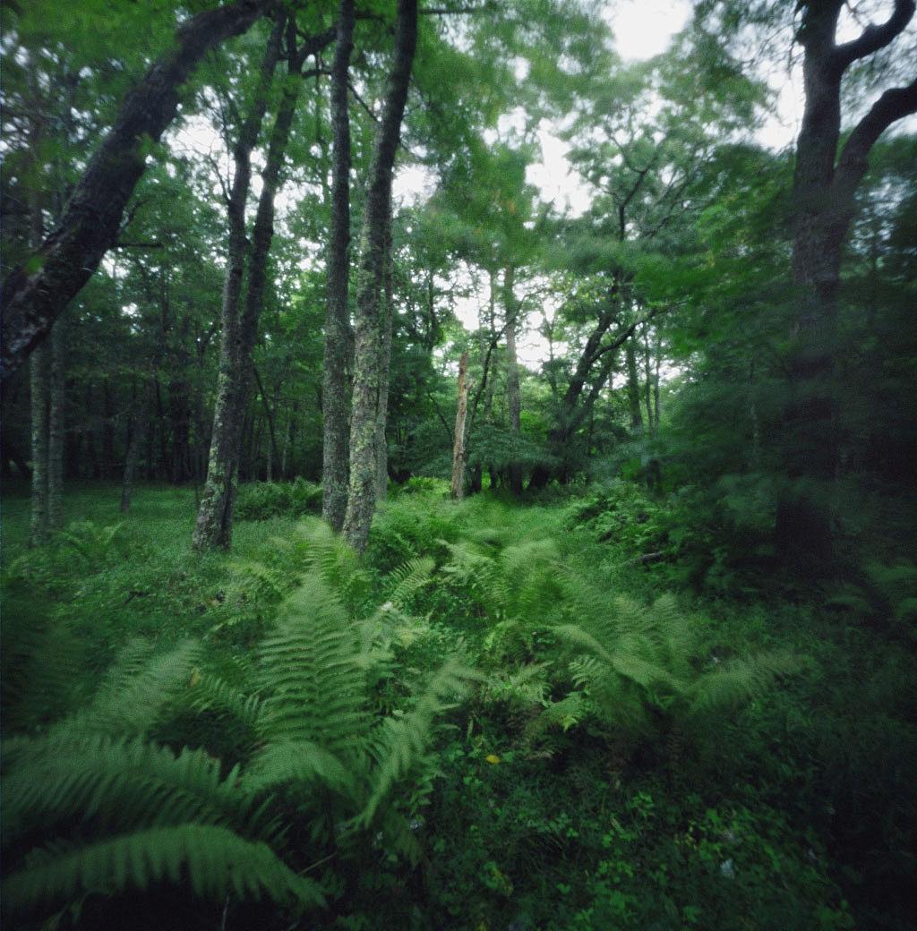 WILD SPOROPHYTES CIRCA 2008