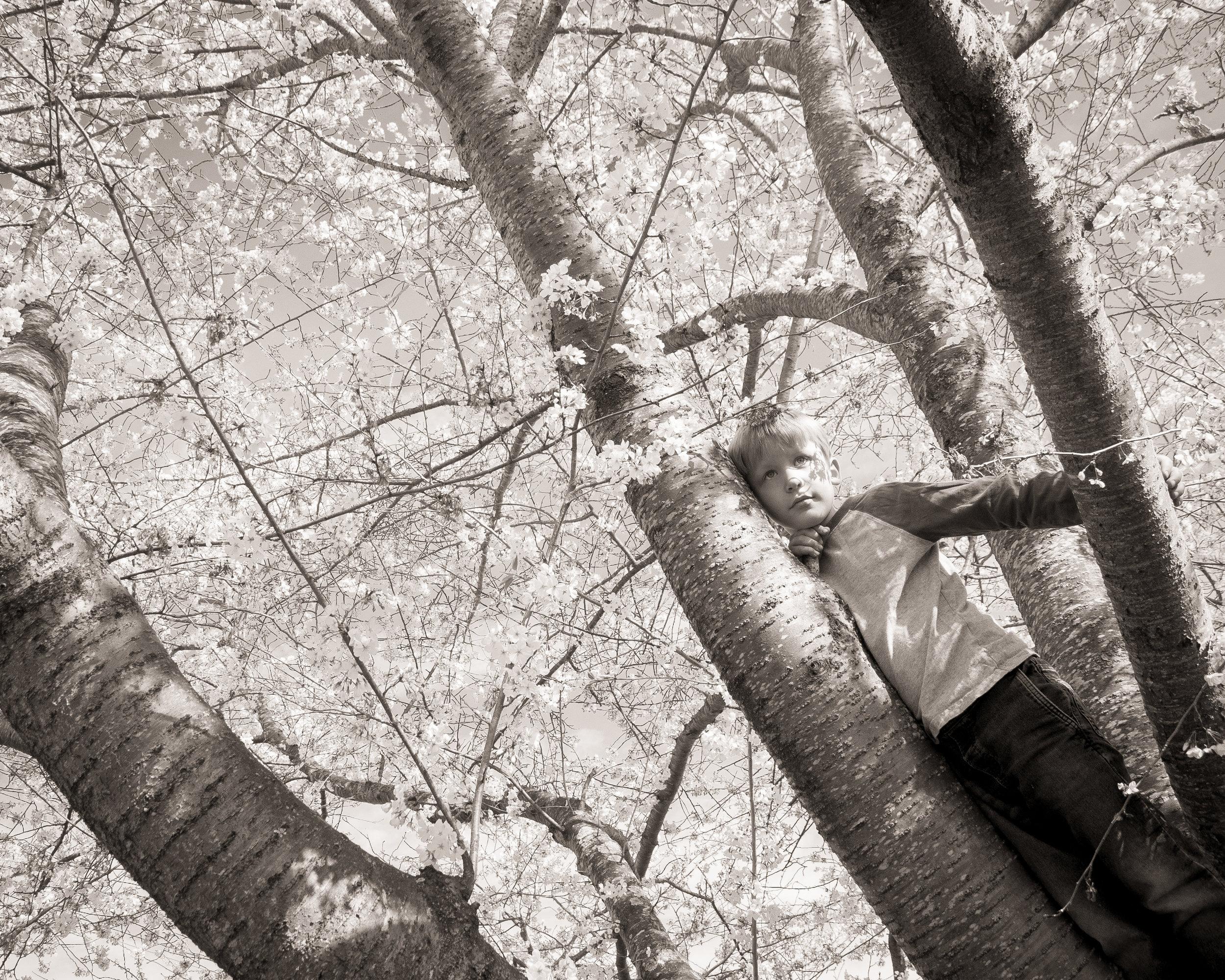 CHERRY TREE 2017