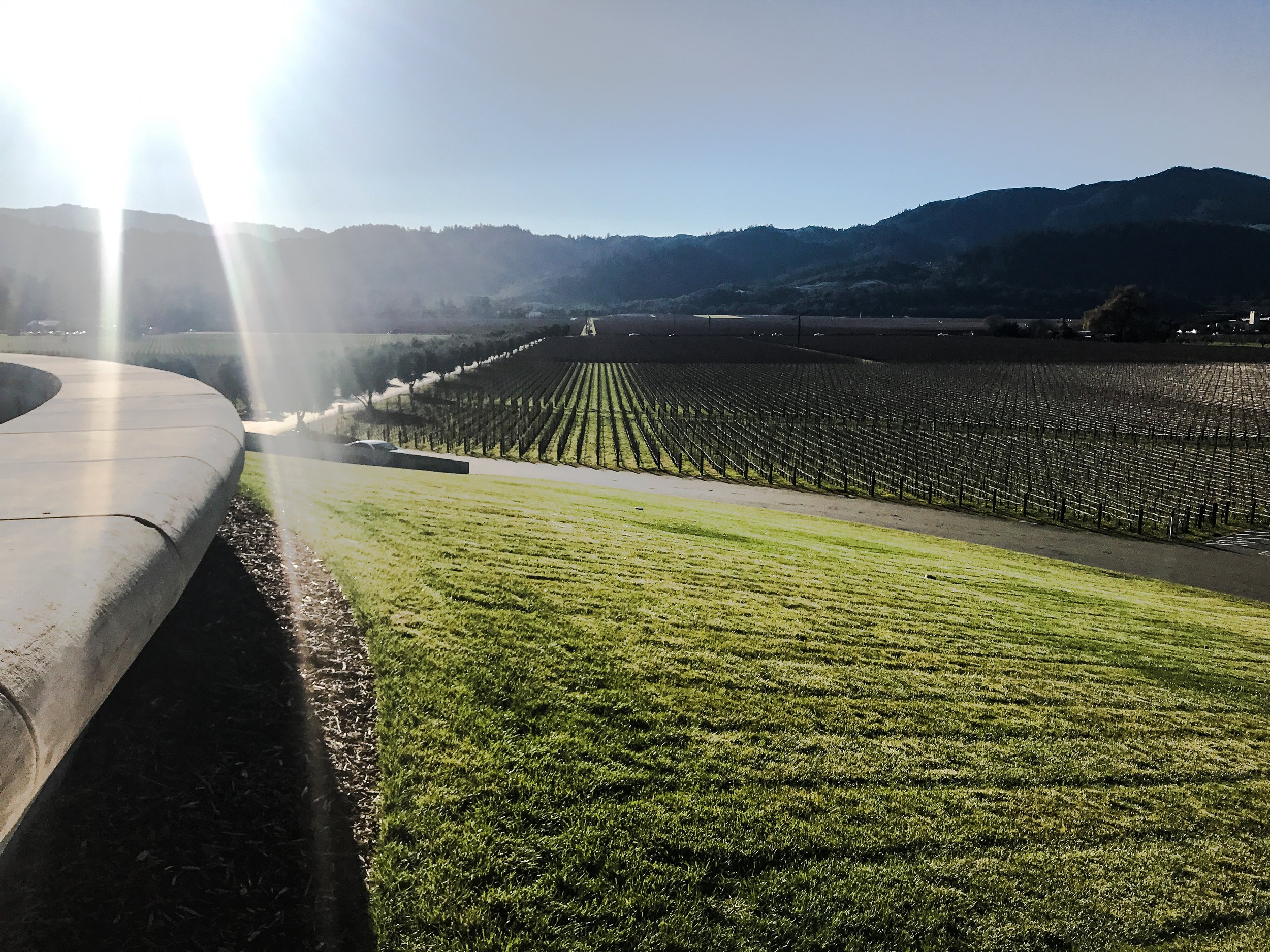 View from Opus One Winery