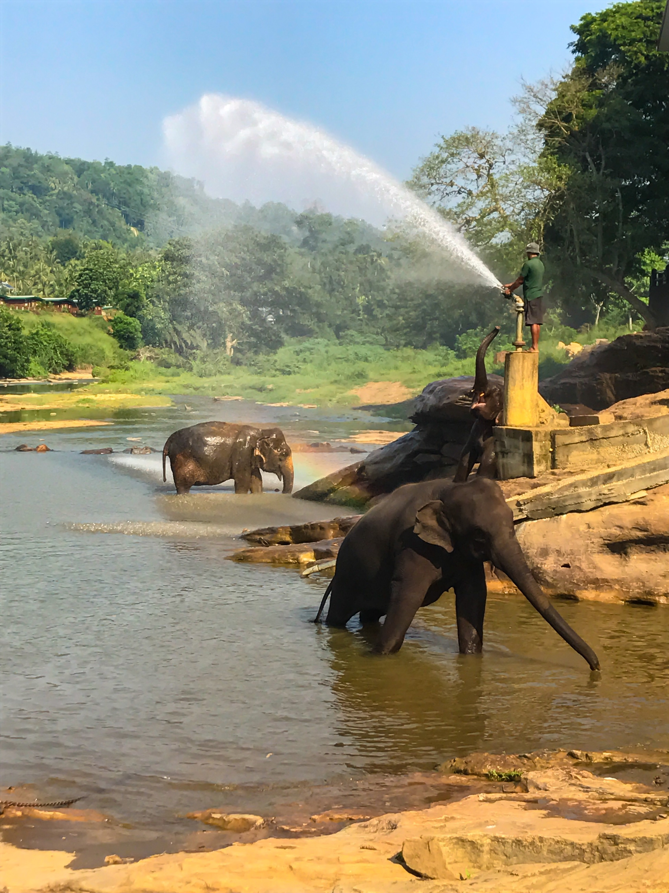 Pinnawala Elephant Baths