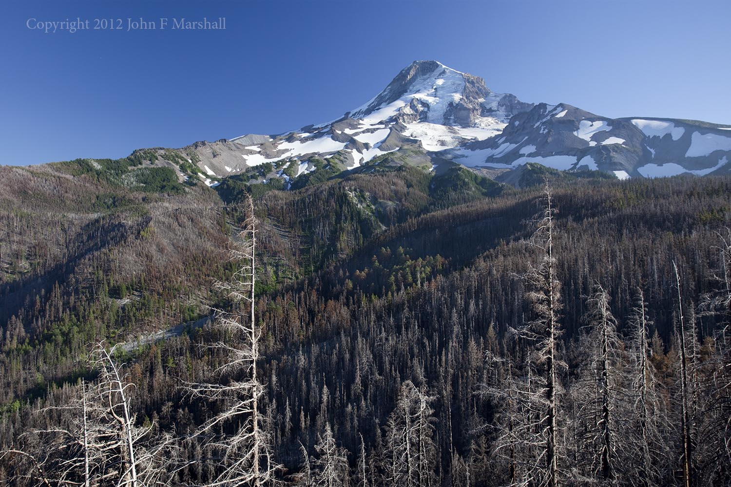 At about three miles there is a great viewpoint into the Coe Branch of the East Fork of Hood River.  My 2012 photo shows needles clinging to the fire-killed trees. August 15, 2012