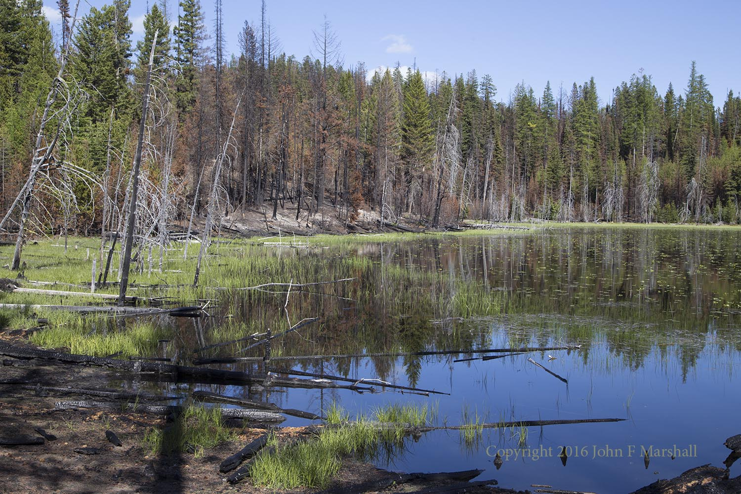 "Far from ruining this little lake, the fire added ecological diversity.  The burned patch will support shrubs and grasses.  I can visualize swallows nesting in the snags ten years from now and swooping over the lake to grab insects.  This is what is called ""mixed severity"" fire where there is a mix of live and dead trees.   Beaver Lake Fire 2015"