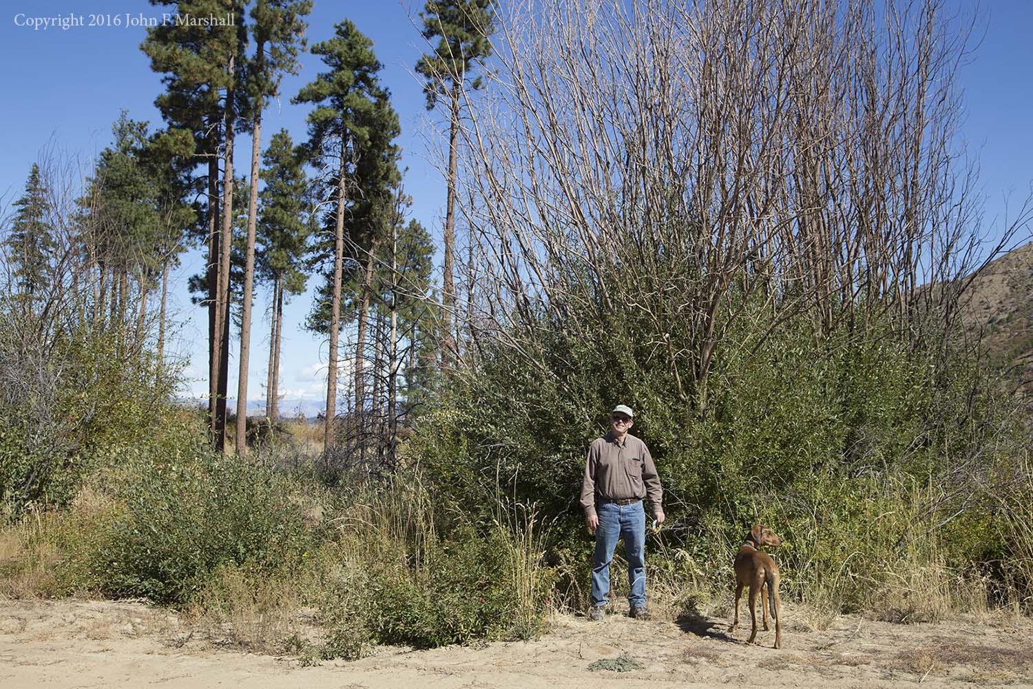 The willows behind me have grown tremendously in the two years since the Mills Canyon Fire of 2014.  Behind me are some of the few remaining large ponderosa pines.