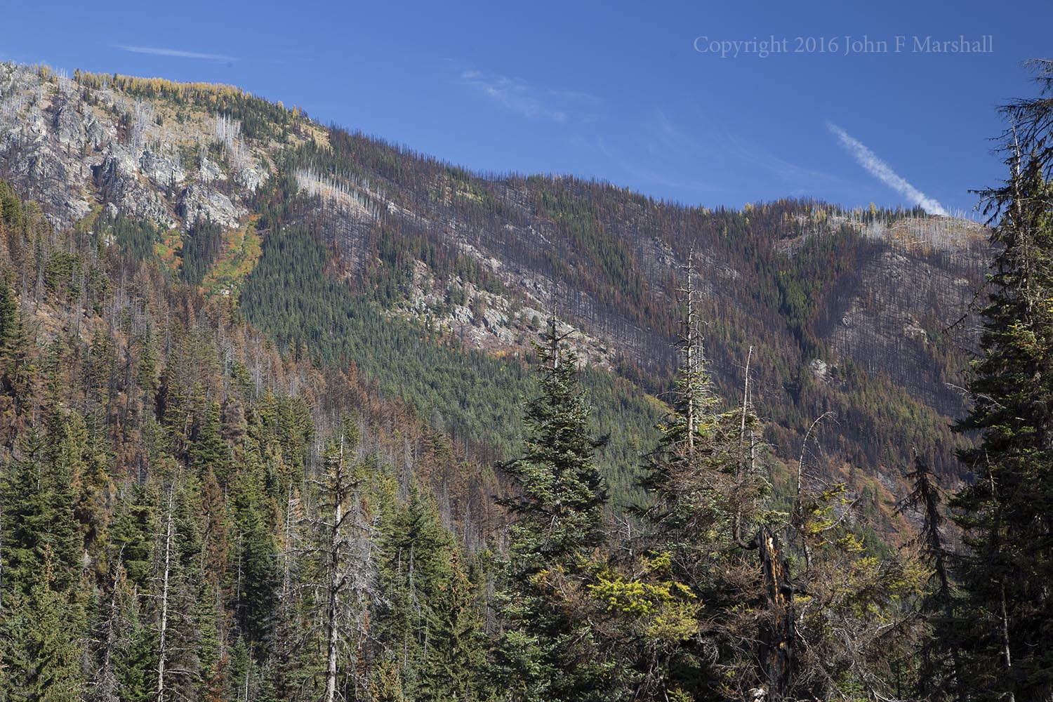 Fire and avalanche have both left their mark on Phelps Ridge.