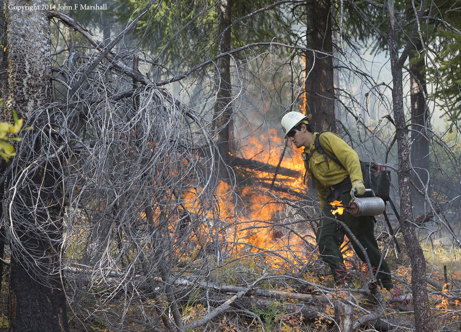A member of the Chelan Initial Attack team traverses the hillside carrying a drip torch.  What burns most easily will be consumed, and prevent a more serious fire later.