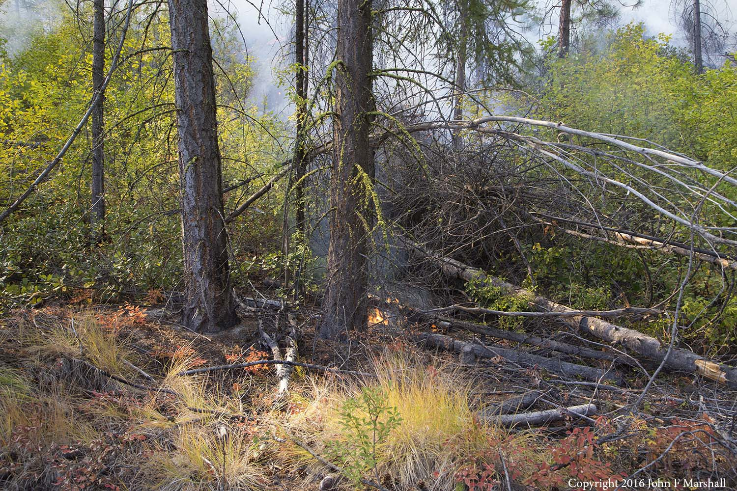 A tree killed many years ago is about to be consumed in fire.  Periodic fires clean up the woods and prevent worse fires.