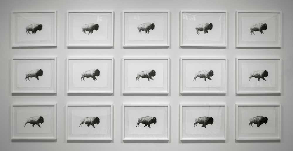 Then Your Prairies Can Be Covered In Speckled Cattle, 1-15 (After Eadweard Muybridge, 1883) | Charcoal & Graphite on Paper, 2017