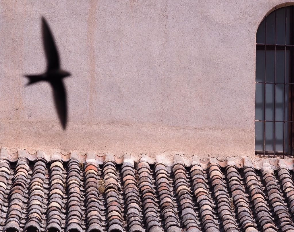 The reflection of a swallow on a museum in the heart of medieval Toledo, Spain