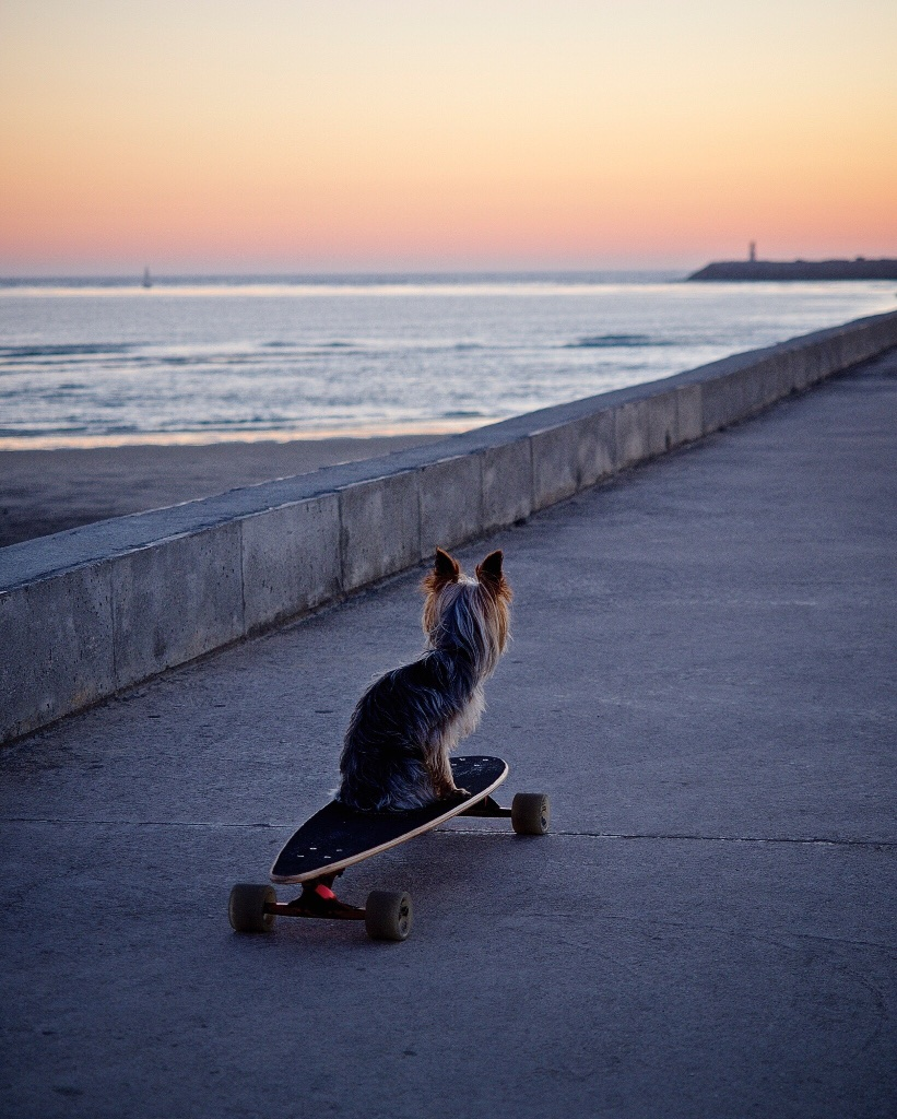 A local pooch enjoys the sunset (and contemplates his next ride?)  in Aveiro