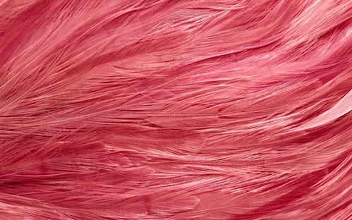 BACKGROUND - Small Feathers.jpg
