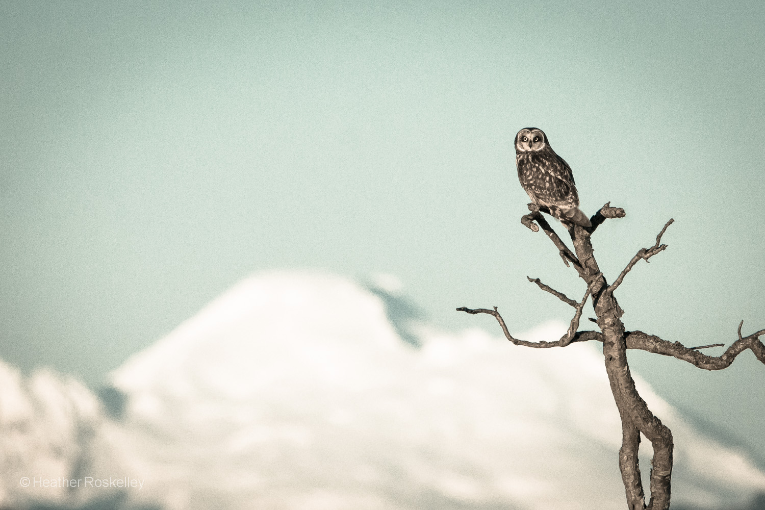 Owl and Mount Baker