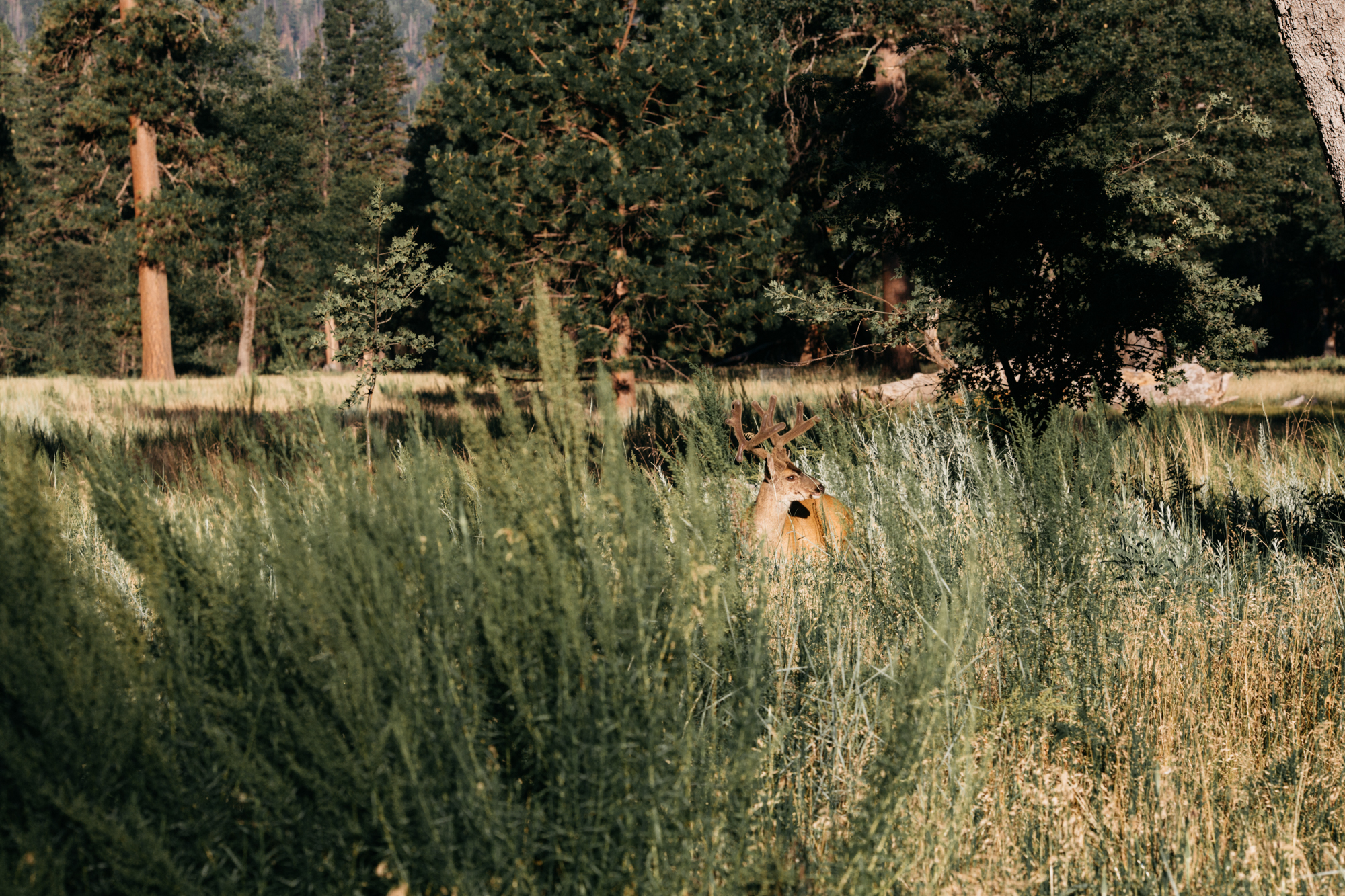 SamErica Studios - Yosemite Adventure-13.jpg