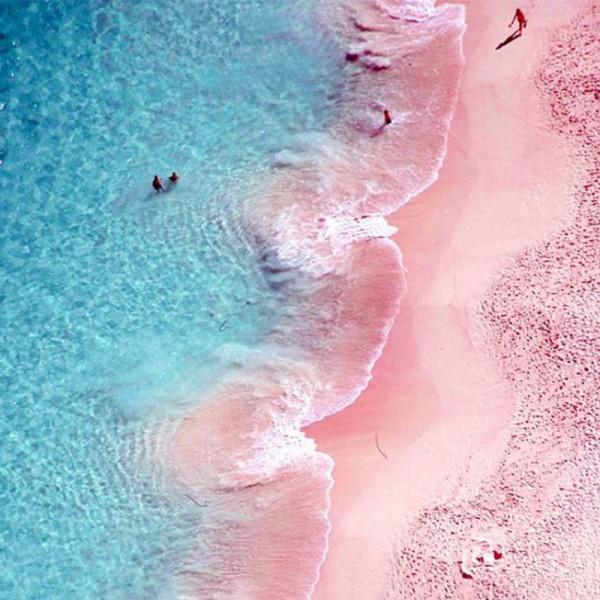 Pink sand beach Bermuda.jpg