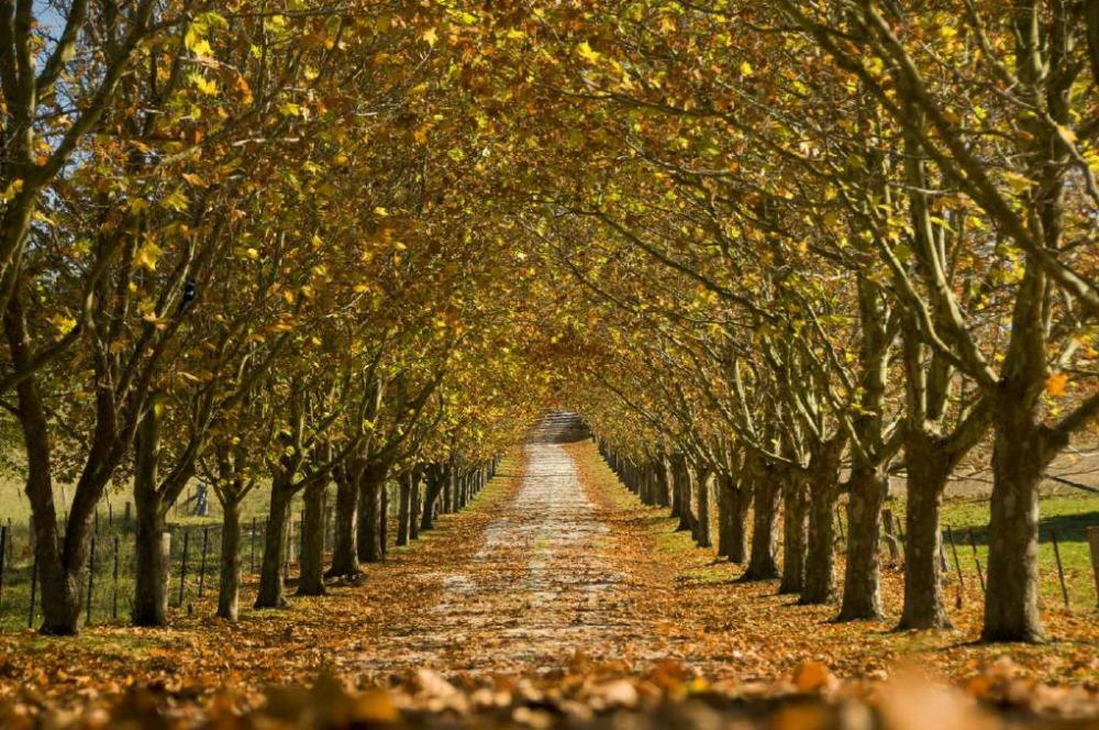 Bowral Trees PM.jpg