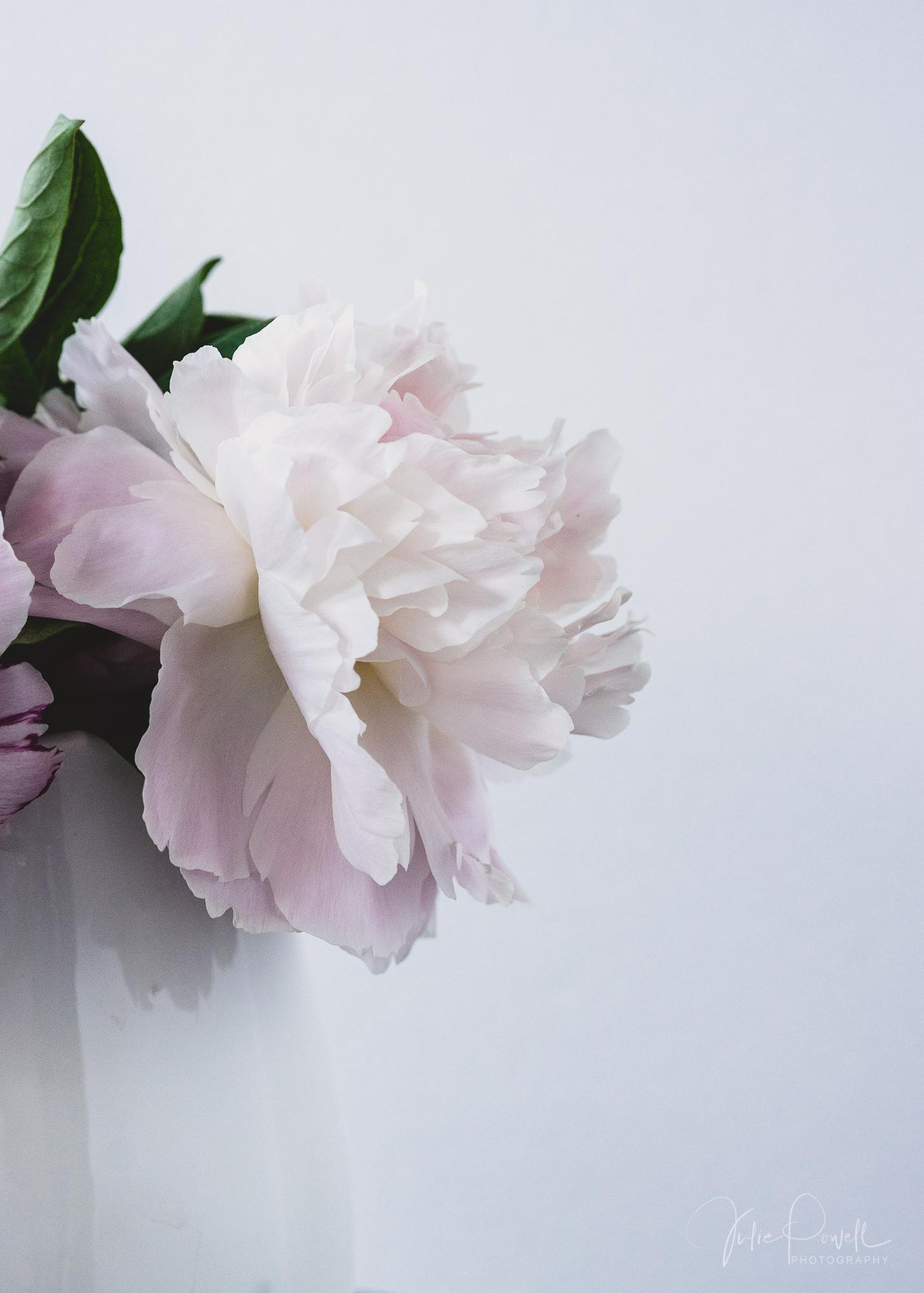 Julie Powell_Peony-6.jpg