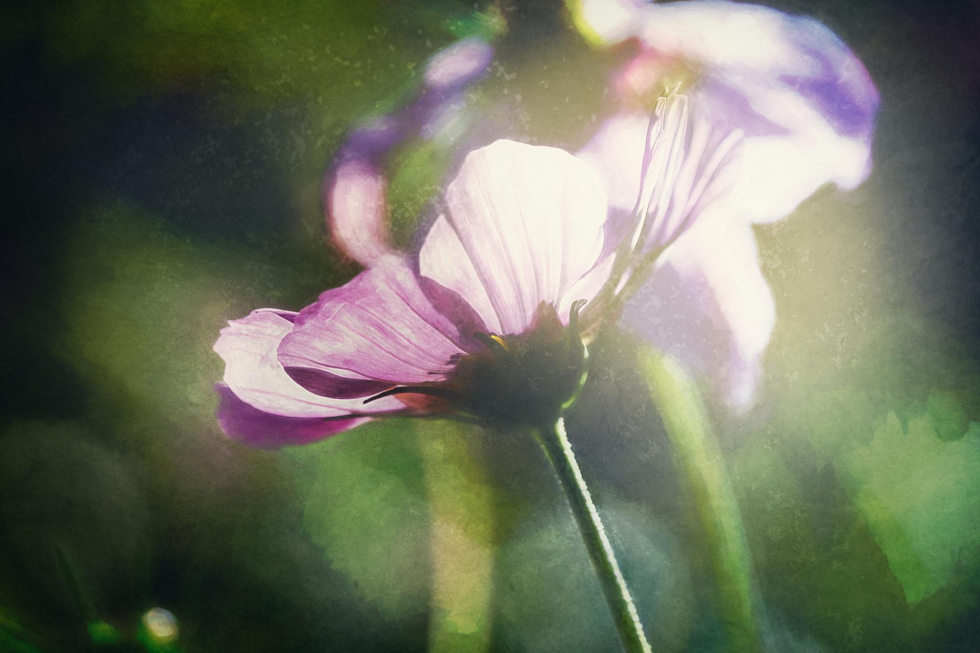 JuliePowell_Floral.jpg