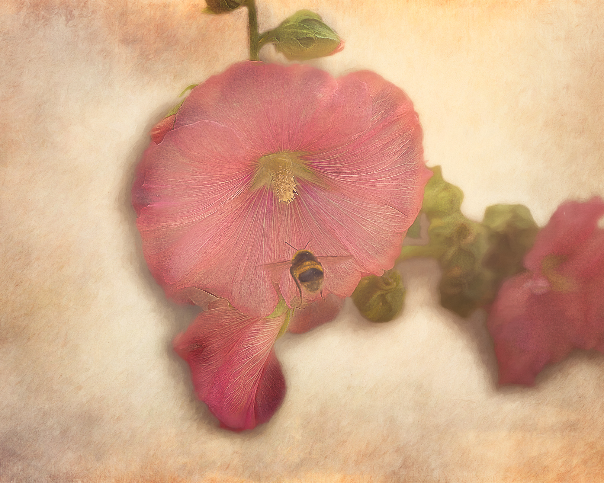 JuliePowell_Hibiscus & Bumblebee.jpg