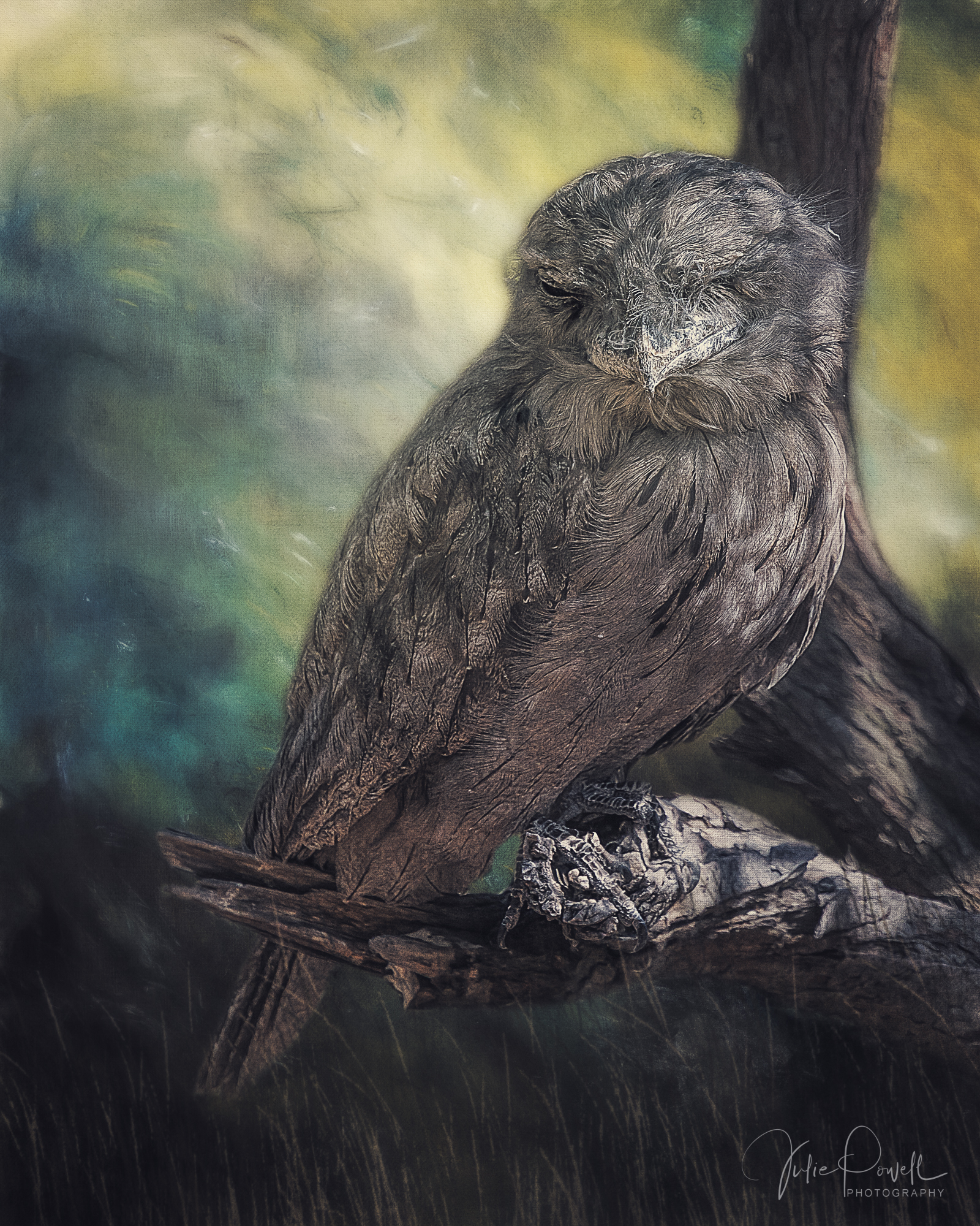 JuliePowell_Tawny Frog Mouth.jpg