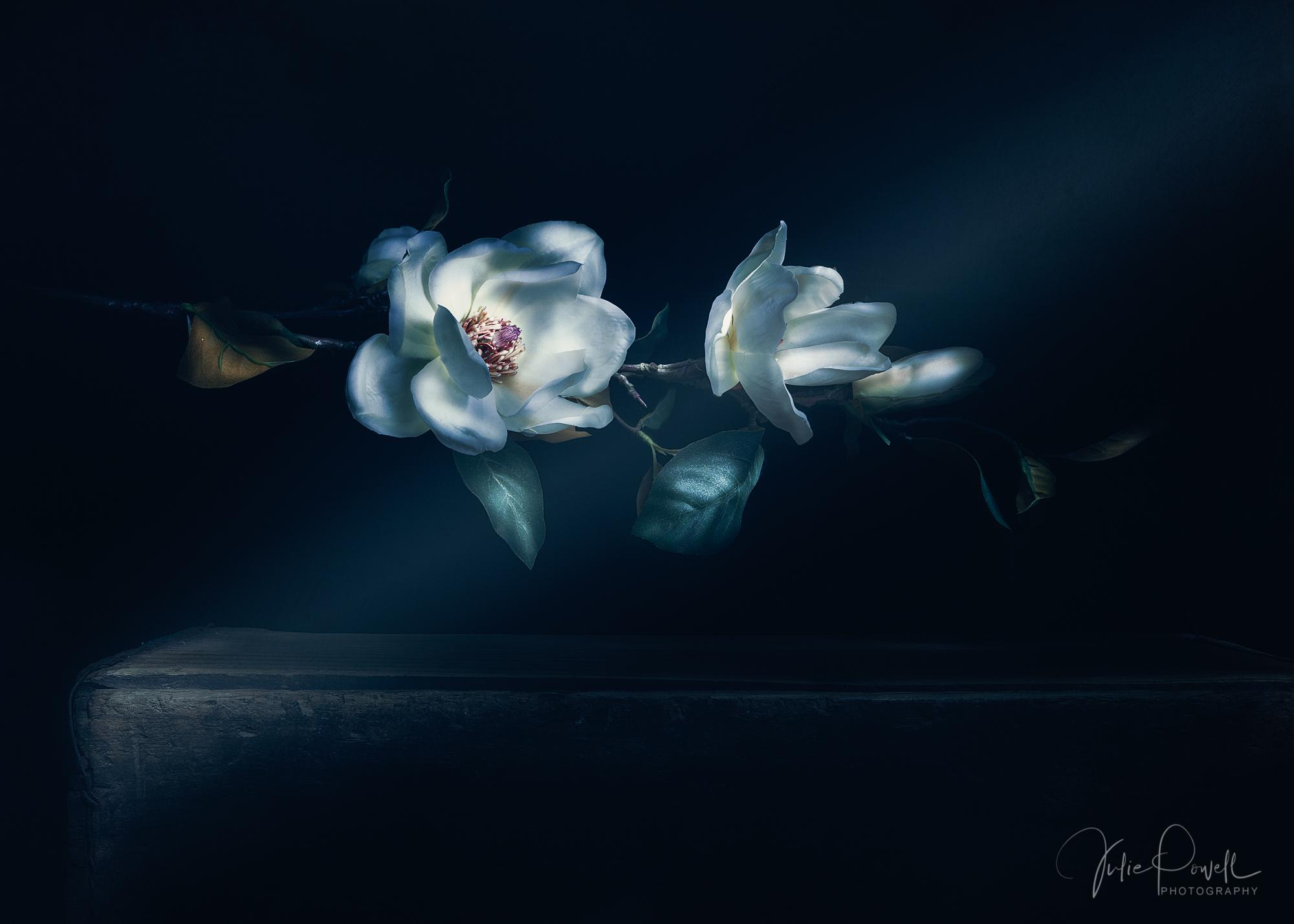 Julie Powell_Magnolias.jpg
