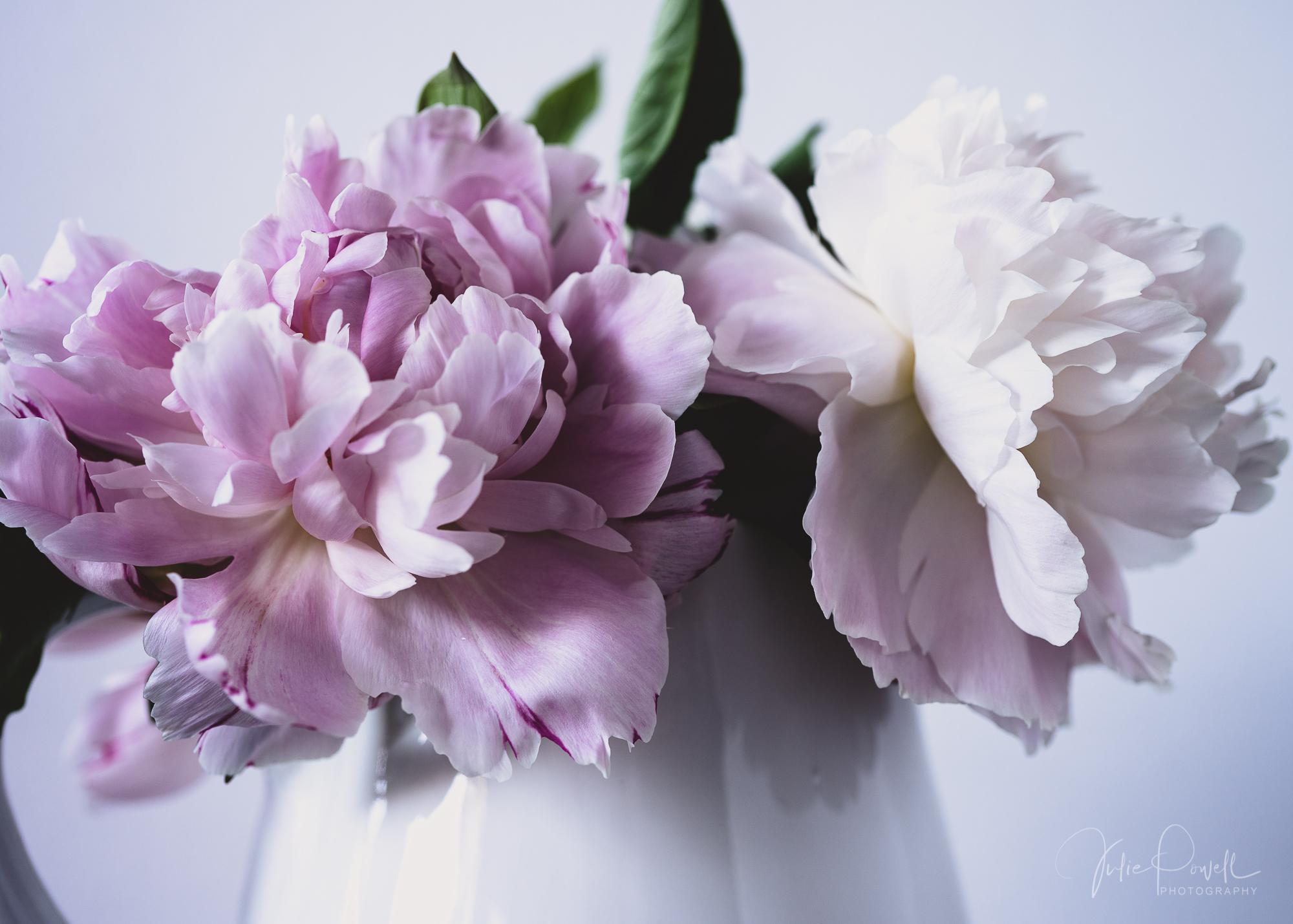 Julie Powell_Peony-8.jpg
