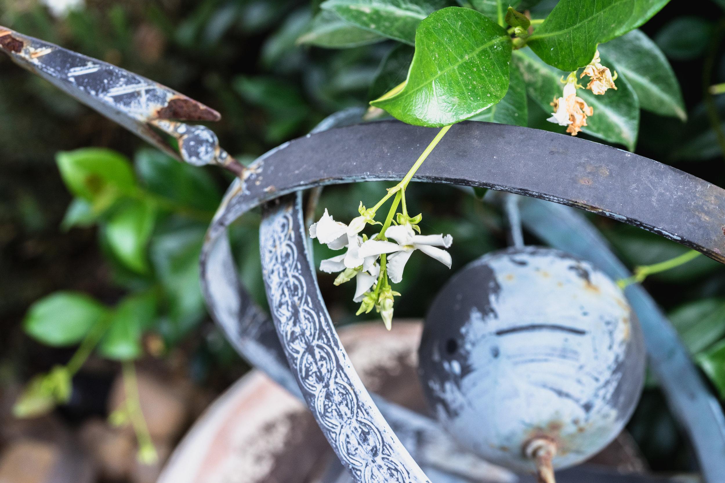 JuliePowell_Backyard-20.jpg