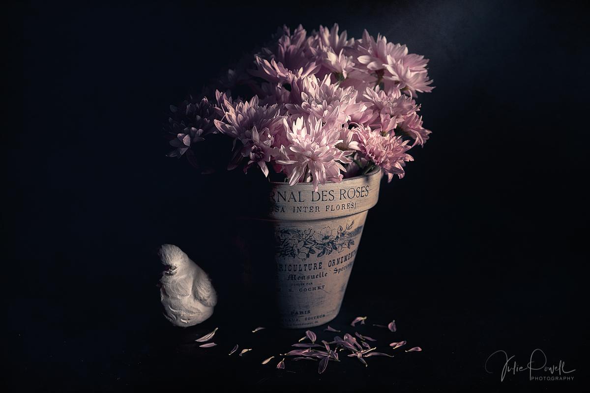 Julie Powell_Mums.jpg