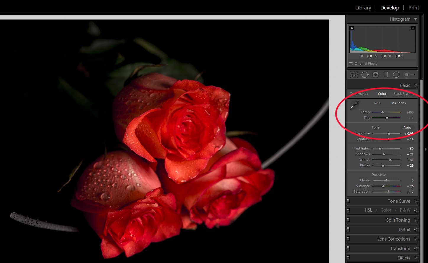 Same roses, same light source but my colour temp was set to 5400 kelvins