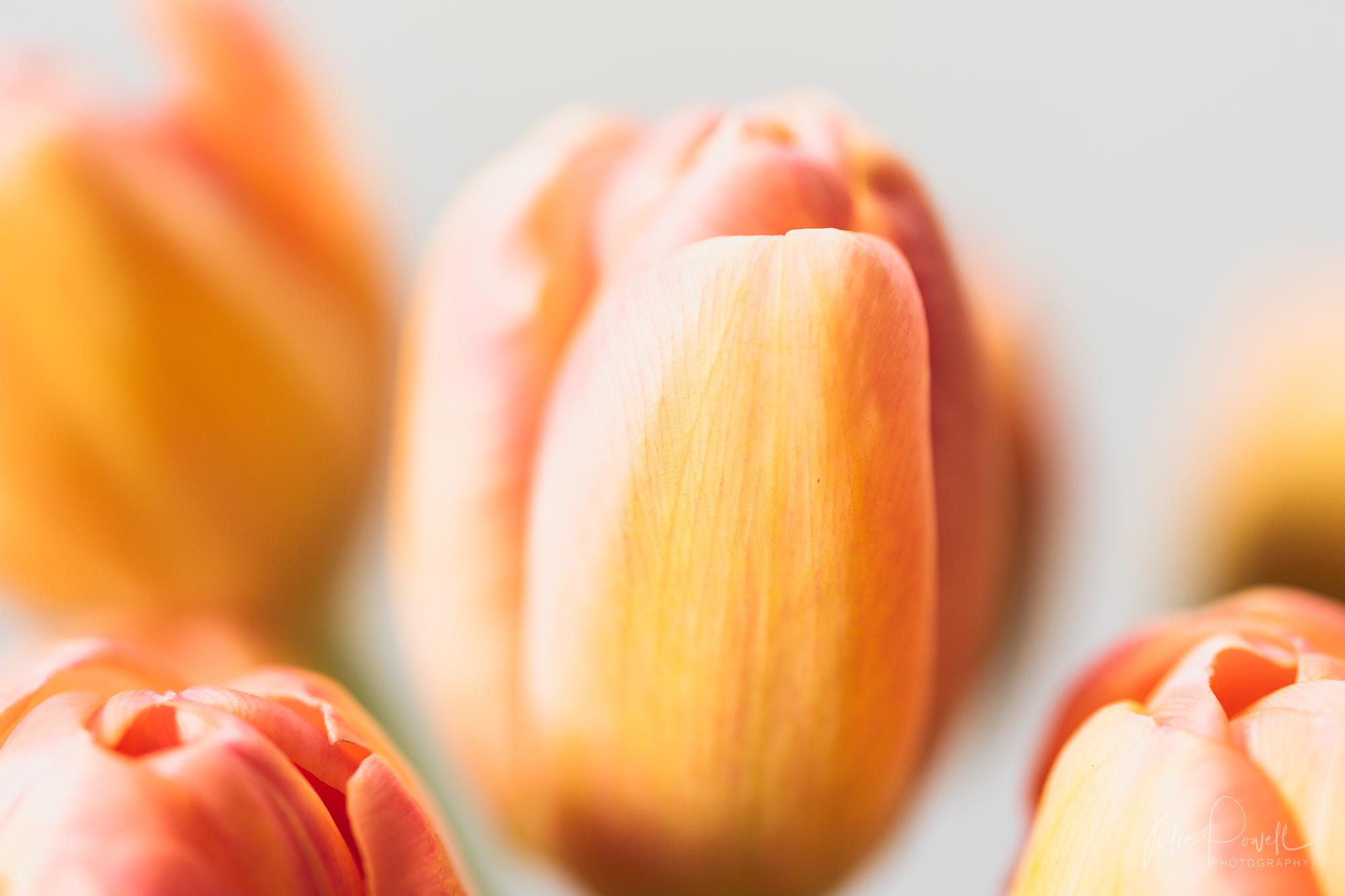Julie Powell_Tulips-3.jpg