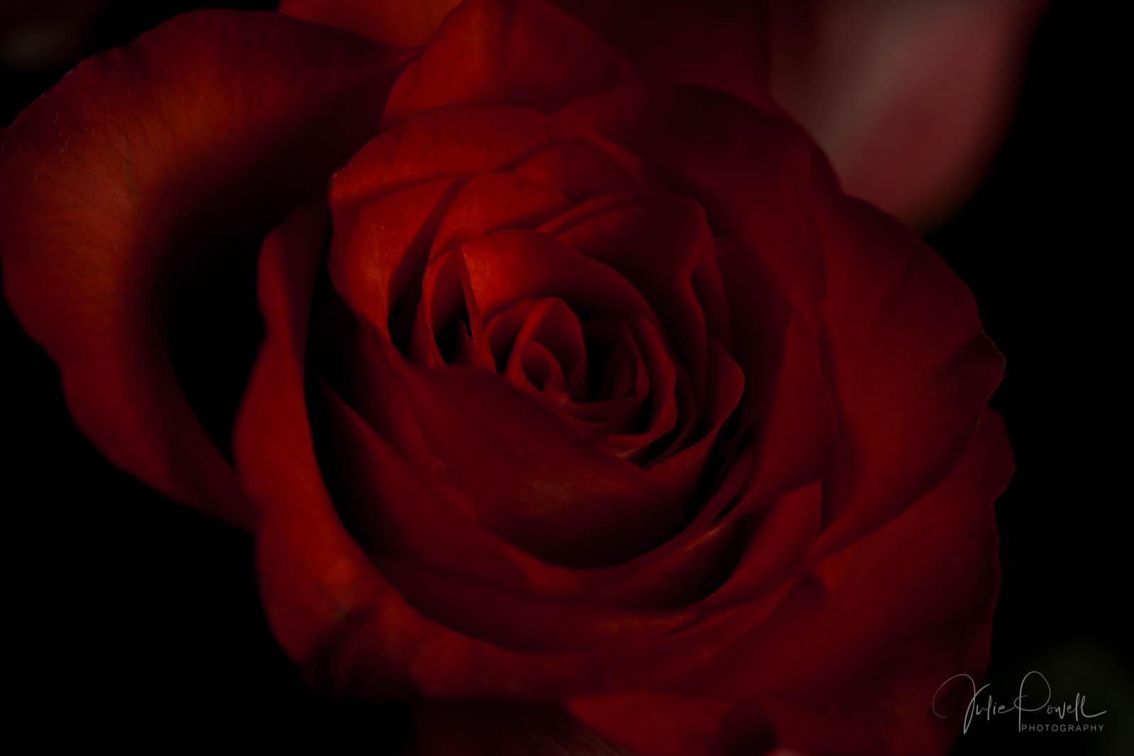Julie Powell_MD Flowers-3.jpg