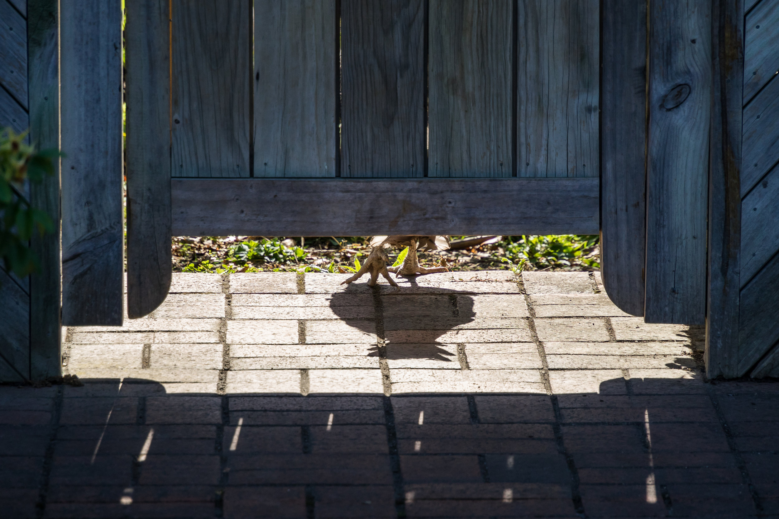 JuliePowell_Hamilton Gardens-85.jpg