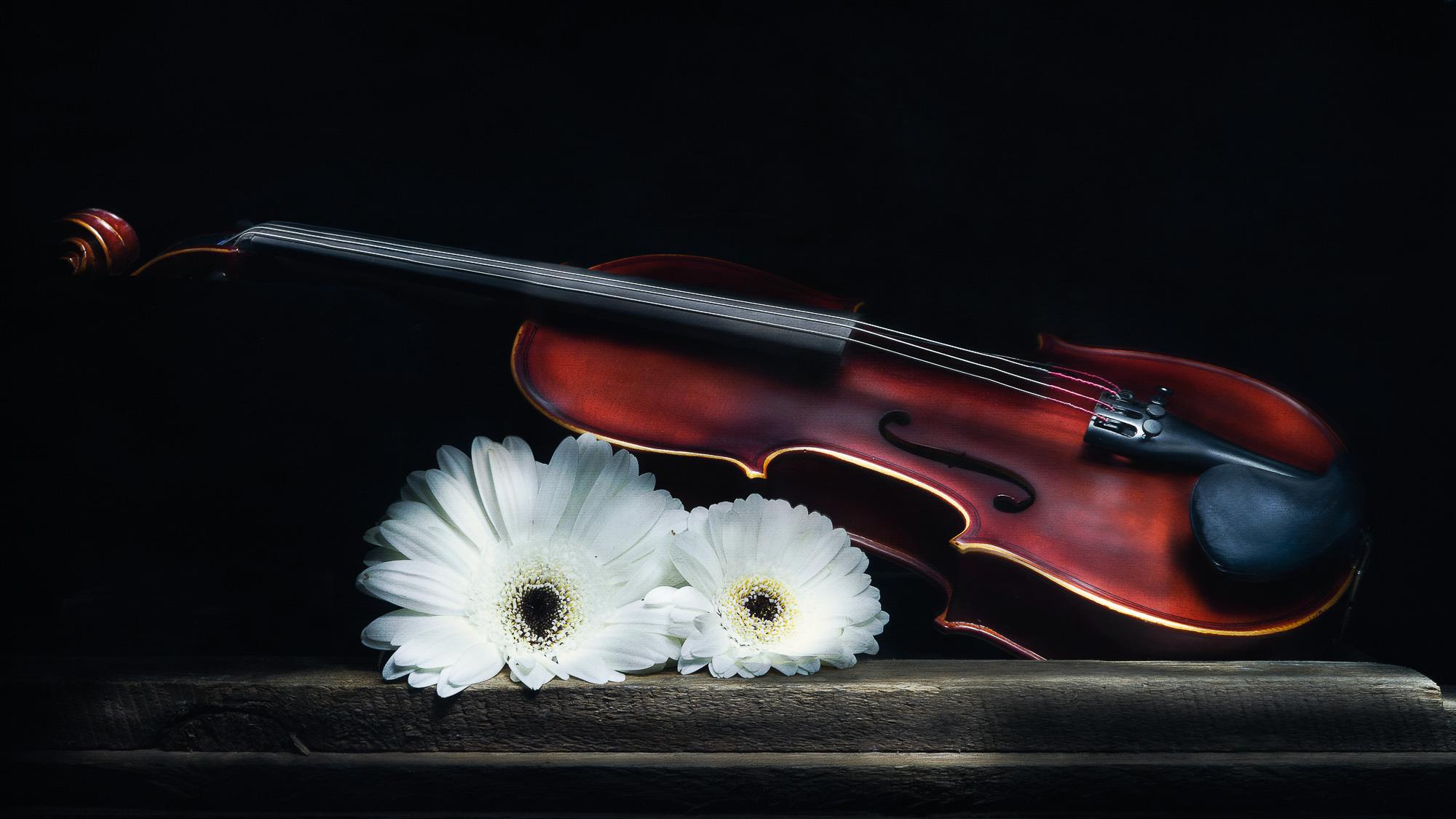 Julie Powell_The Violin-2.jpg
