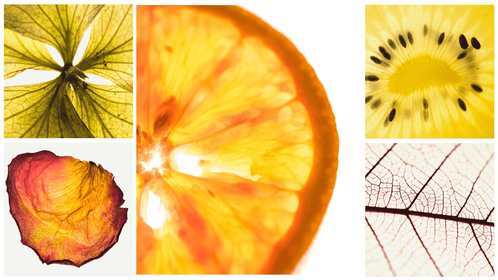 Light-Box-Fruit.png