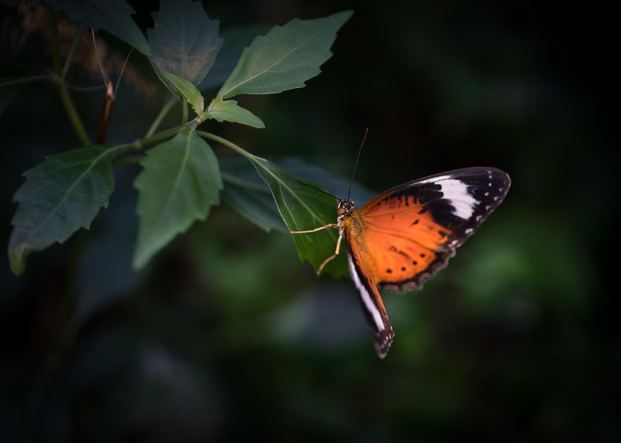 Julie Powell_MM Butterflies-3.jpg