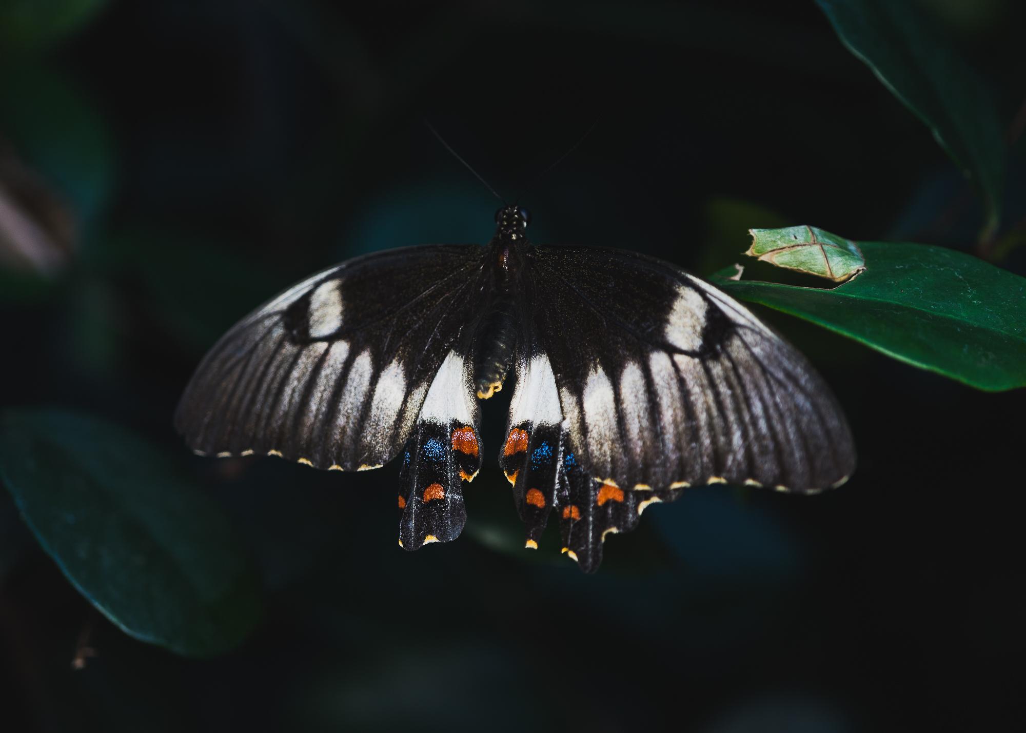 Julie Powell_MM Butterflies-7.jpg
