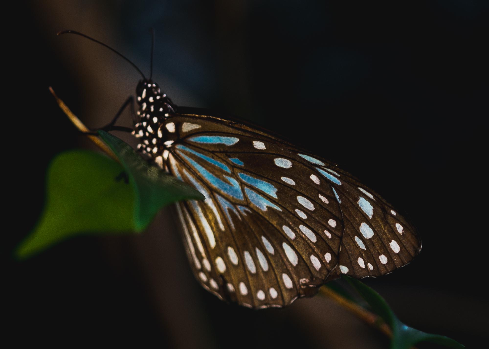 Julie Powell_MM Butterflies-9.jpg