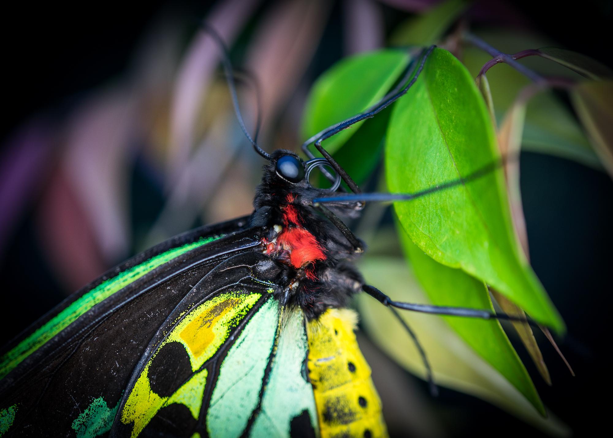 Julie Powell_MM Butterflies-21.jpg