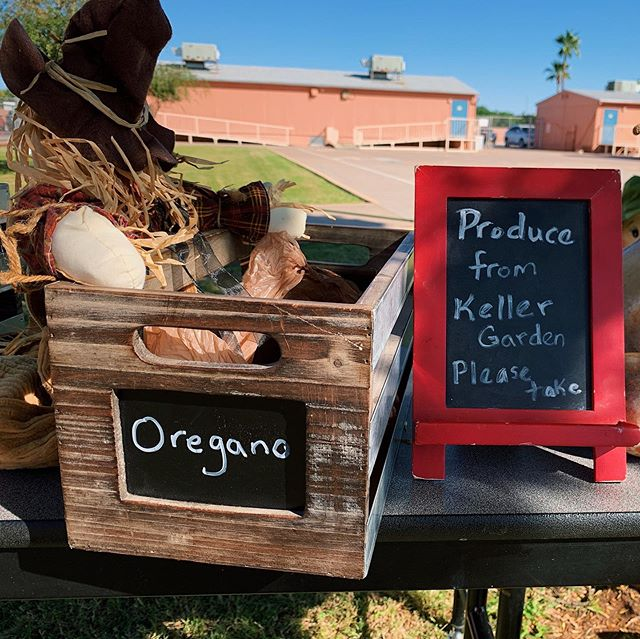 The Garden Club at Keller Elementary School provided produce and herbs to families at parent-teacher conferences today. 🥬 Stay tuned  on @cronkitenews for more on their story. 🥕