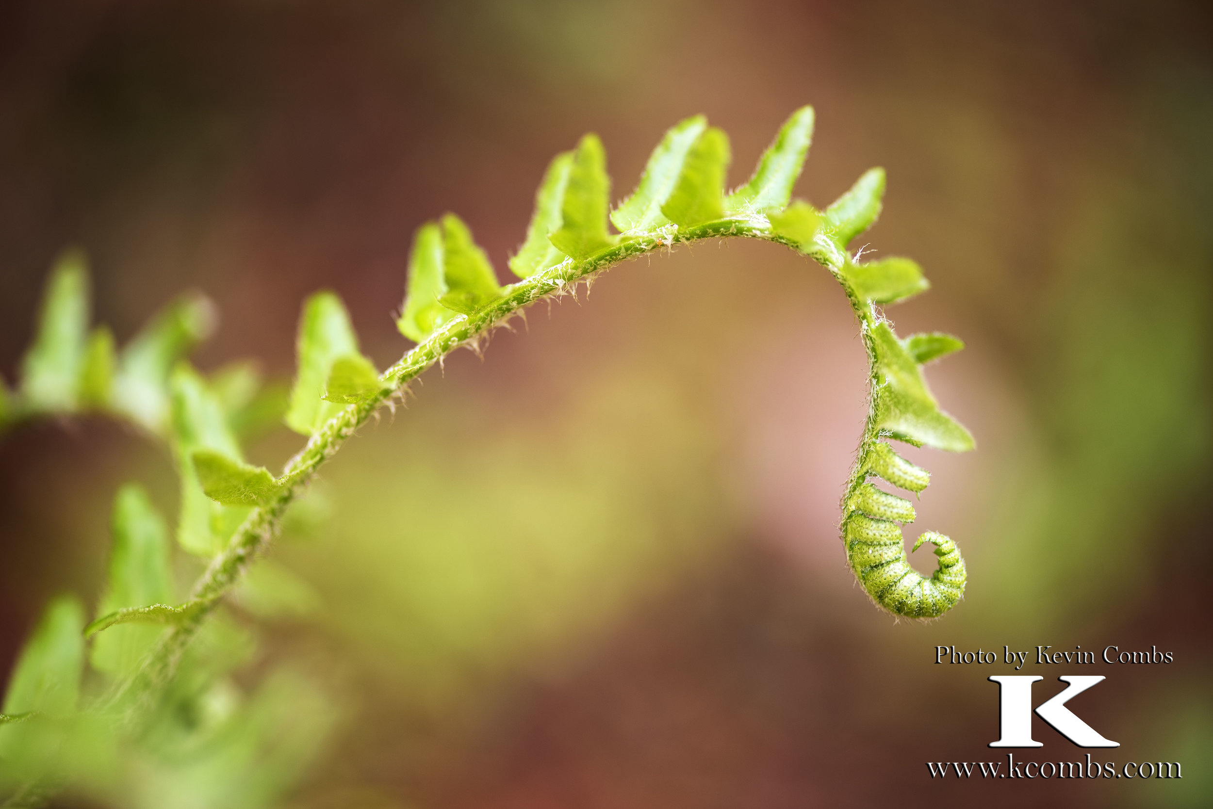 2017 04 16 Fiddleheads and more_2178.jpg
