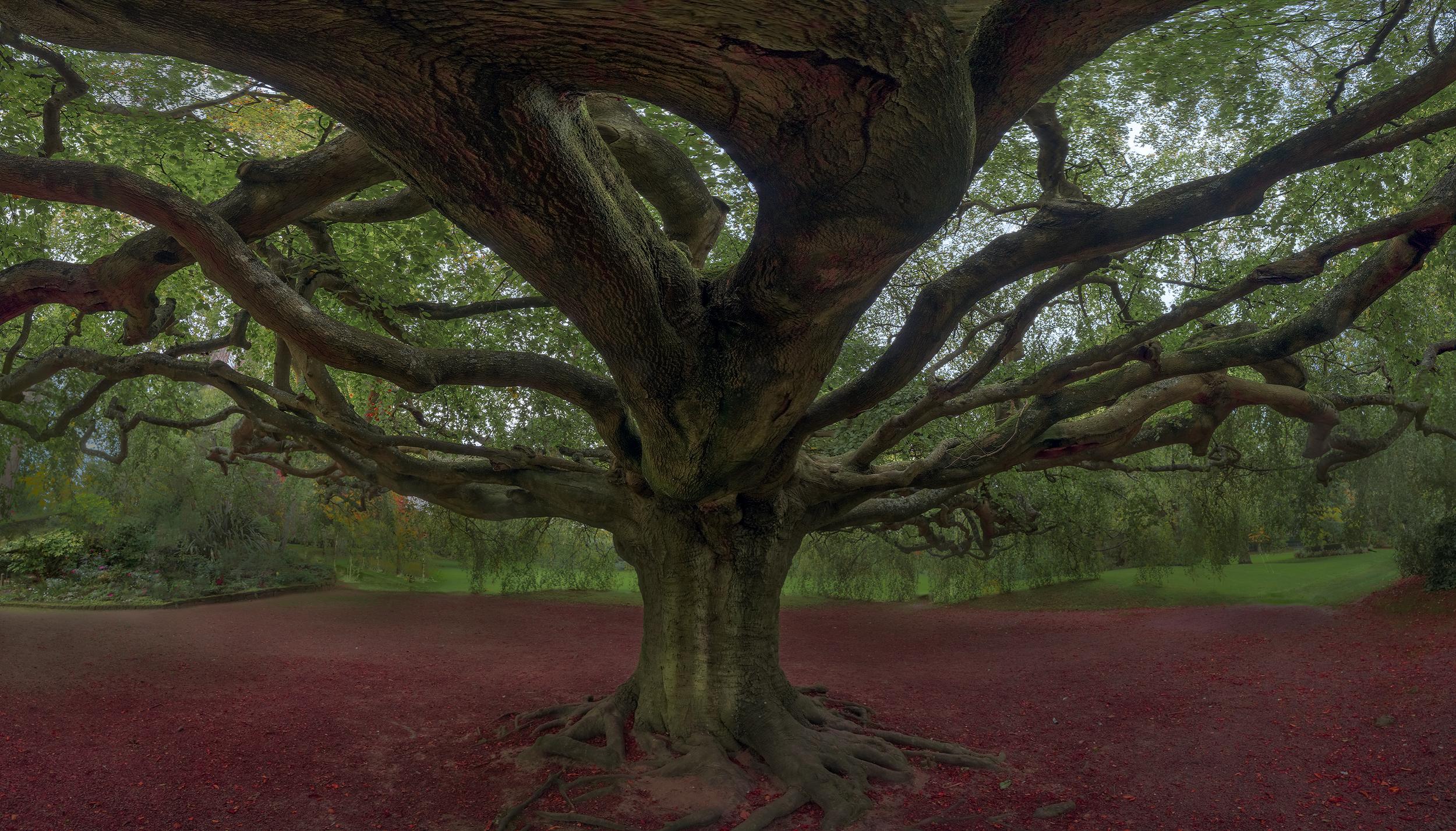 A lifelong love affair with trees.