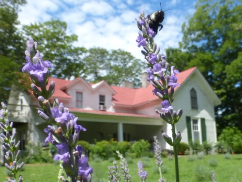 1865 farmhouse - Come join us on the porch for lavender tea