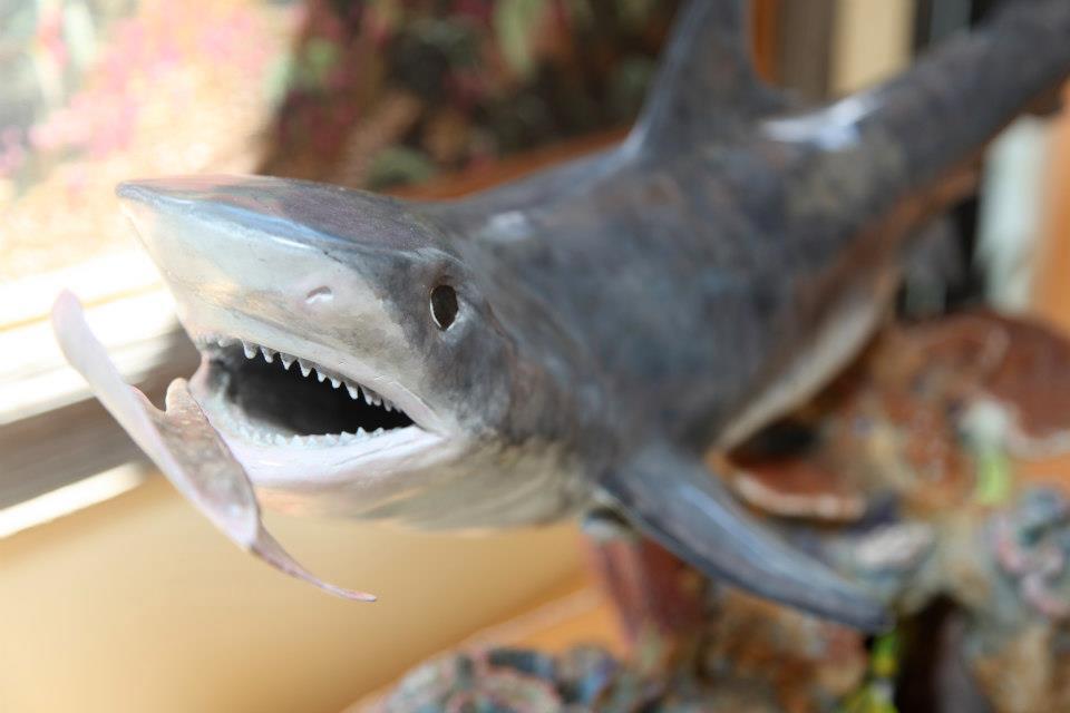 detail-tiger-shark.jpg