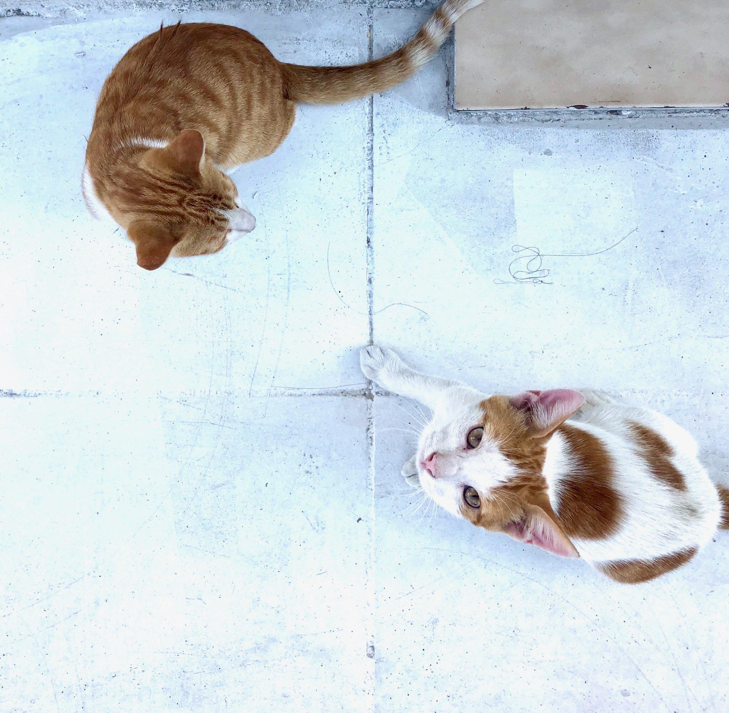vegan kittens in greece