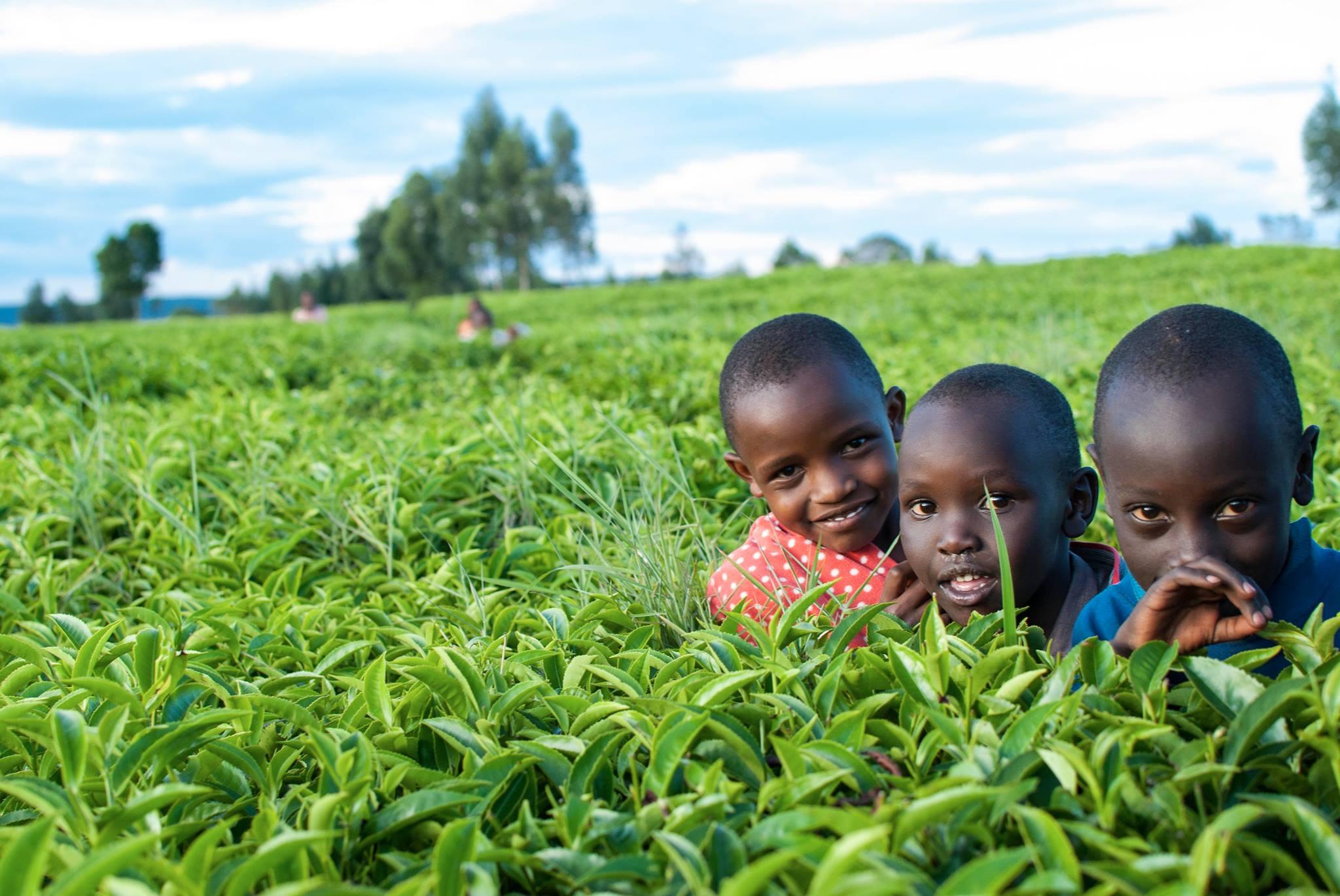 Kids in tea field.jpg
