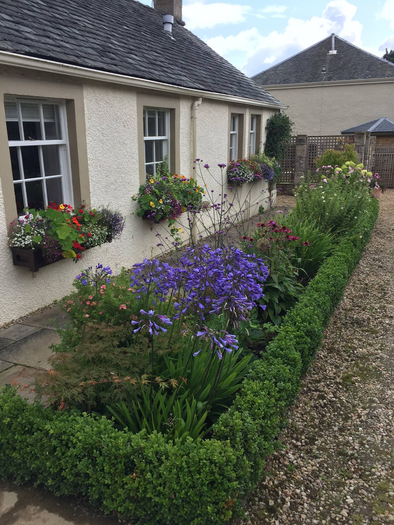 Herbaceous border within a perimeter box hedge for a garden near Glasgow