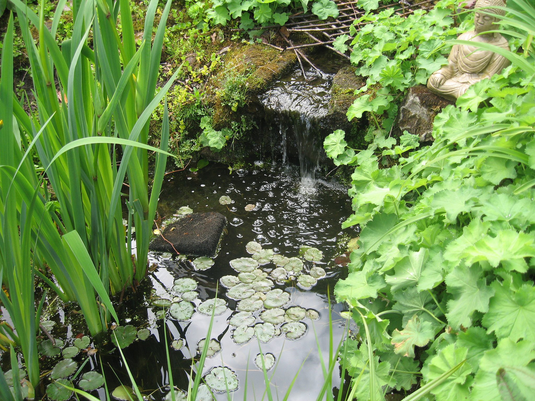 Natural Water Feature, Giffnock
