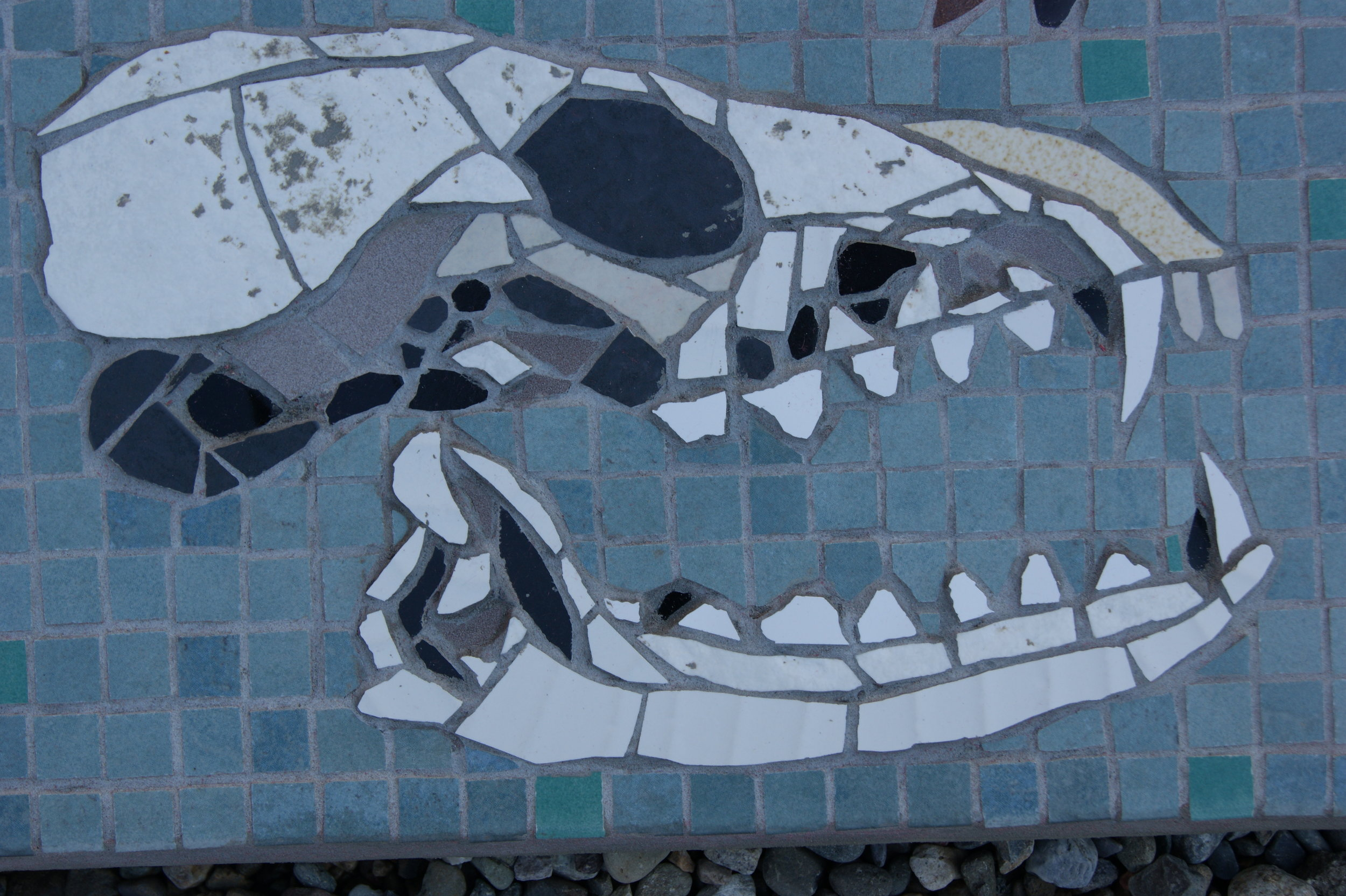 "Section of the ""Biodiversity"" mosaic at Wyre Forest, Bewdley.  Skulls . Recycled ceramic tile and crockery."