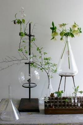 Botanical alchemy – plant inspired beauty
