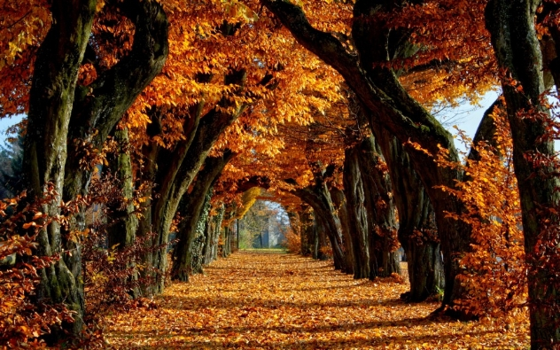fiery tunnel of autumn leaves